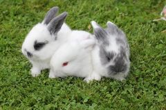 Baby rabbits in grass stock photo