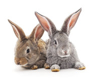 Baby rabbits. Grey and brown baby rabbits on a white background Stock Photography