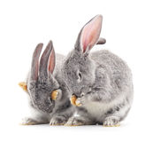 Baby rabbits. Stock Photos