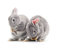 Baby rabbits. Grey baby rabbits on a white background Royalty Free Stock Image