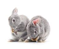 Baby rabbits. Royalty Free Stock Image