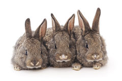 Baby rabbits. Royalty Free Stock Photos