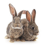 Baby rabbits. Stock Image