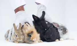 Baby rabbits sitting together Royalty Free Stock Images