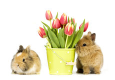 Baby rabbits with tulips Stock Photos