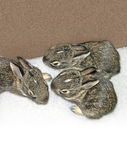 Baby Rabbits. Which were rescued twice from their nest during mowing. They were returned to thier nest each time, and fortunately their mother returned to care Royalty Free Stock Image