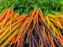 Baby Rainbow Carrots Royalty Free Stock Photo