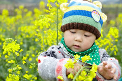 Baby in the rape field Royalty Free Stock Images