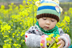 Baby in the rape field Royalty Free Stock Photo