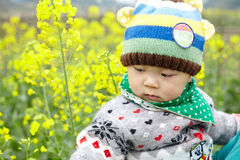 Baby in the rape field Royalty Free Stock Image