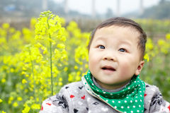 Baby in the rape field Stock Image