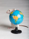 Baby rat with a globe Royalty Free Stock Photos