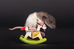 Baby rat on toy horse Royalty Free Stock Photo