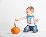 Baby Reaches for Pumpkin Interested. A cute 1 year old sits in a white studio setting with a pumpkin. The boy reaches his arm out towards a pumpkin interested in Stock Photo