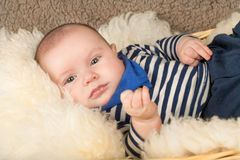 Baby on the blanket Royalty Free Stock Image