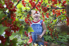 Baby through red currant Stock Images