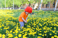 Baby in red hat walking against dandelions Stock Photography