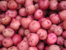 Baby Reds. Baby Red potatoes Royalty Free Stock Images
