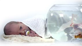 Baby resting next to fish tank stock footage