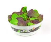 Baby Romaine Lettuce Leaves Stock Image