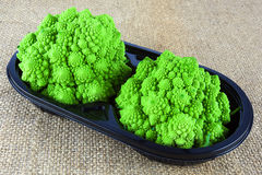 Baby Romanesco broccoli Stock Photography