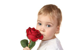 Baby with rose royalty free stock photo