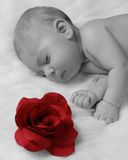 Baby with rose. Baby sleeping on furry blanket with rose Stock Photo
