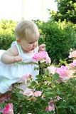 Baby and rose. Baby sees rose for the first time Stock Photography