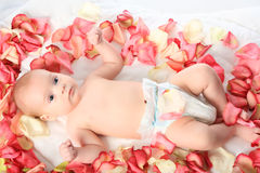 Baby in roses Royalty Free Stock Photo