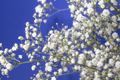 Baby ` s Atem-Blumenstrauß und blauer Himmel-Hintergrund Lizenzfreies Stockbild