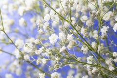 Baby ` s Atem-Blumenstrauß und blauer Himmel-Hintergrund Stockbild