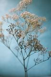 Baby's Breath Artistic Blue and White Royalty Free Stock Image