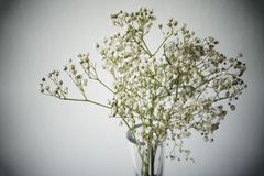 Baby& x27;s breath flowers. In room with white Royalty Free Stock Images