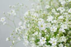 Baby's breath flowers Stock Photo