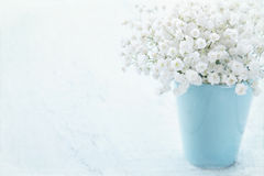 Baby's breath flowers in a vase Royalty Free Stock Photos