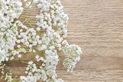 Baby's breath (gypsophila paniculata) on wood Stock Images
