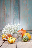 Baby's breath (gypsophilia paniculata) and colorful pumpkins Stock Images