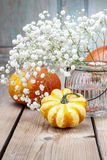 Baby's breath (gypsophilia paniculata) and colorful pumpkins Stock Image