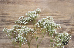 Baby's breath (gypsophilia paniculata) Royalty Free Stock Photography