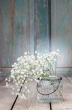 Baby's breath (gypsophilia paniculata) on wooden background Royalty Free Stock Image