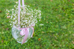 Baby's Breath Stock Image
