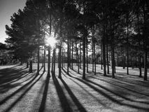 Baby it's cold outside!. I love the shadows and illusions trees give off Stock Image