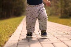 Baby` s eerste stappen De eerste onafhankelijke stappen De stemming van de herfst Vele roze en magenta asters Royalty-vrije Stock Foto