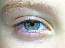Baby`s eye close-up, blue eye. Eyebrow look blue eye , eye close-up royalty free stock photo