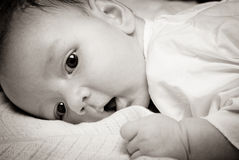 Baby's face Stock Photography