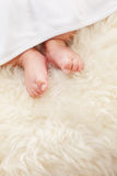 Baby's feet Stock Images