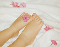 Baby`s feet. With flower Stock Image