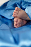 Baby's feet Stock Photo