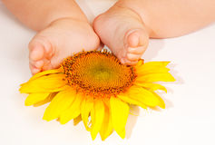 Baby's feet on sunflower Royalty Free Stock Images