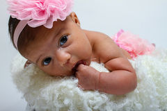 Baby's first photoshoot. Stock Photography
